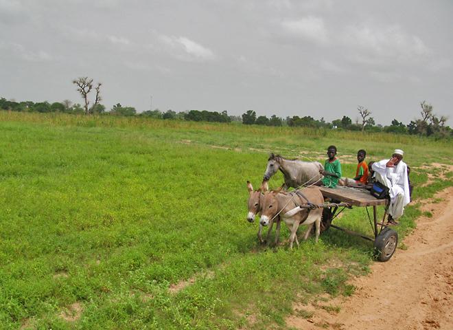 donkey carts pulling maribout and boy