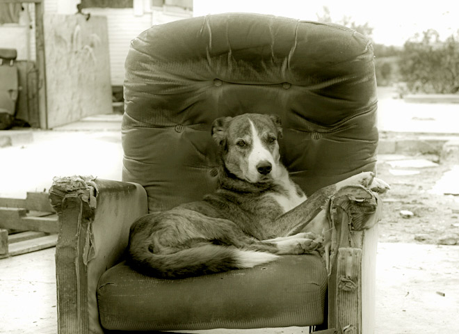 Dog in a destroyed chair
